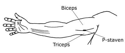 ømme bryster etter mensen ålesund eskorte